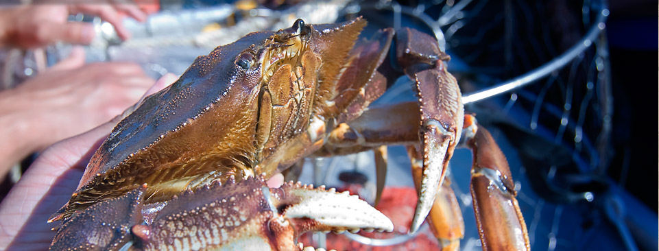 Enjoy some of the best crabbing on the Oregon Coast